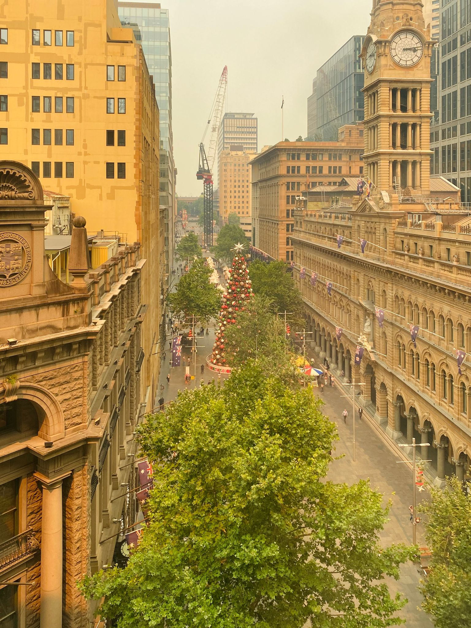A view up Martin Place in Sydney's CBD taken from the 5th floor of a building. There's a big green tree at the bottom of the photo, tall buildings on either side, and the whole scene is bathed in a yellow light.