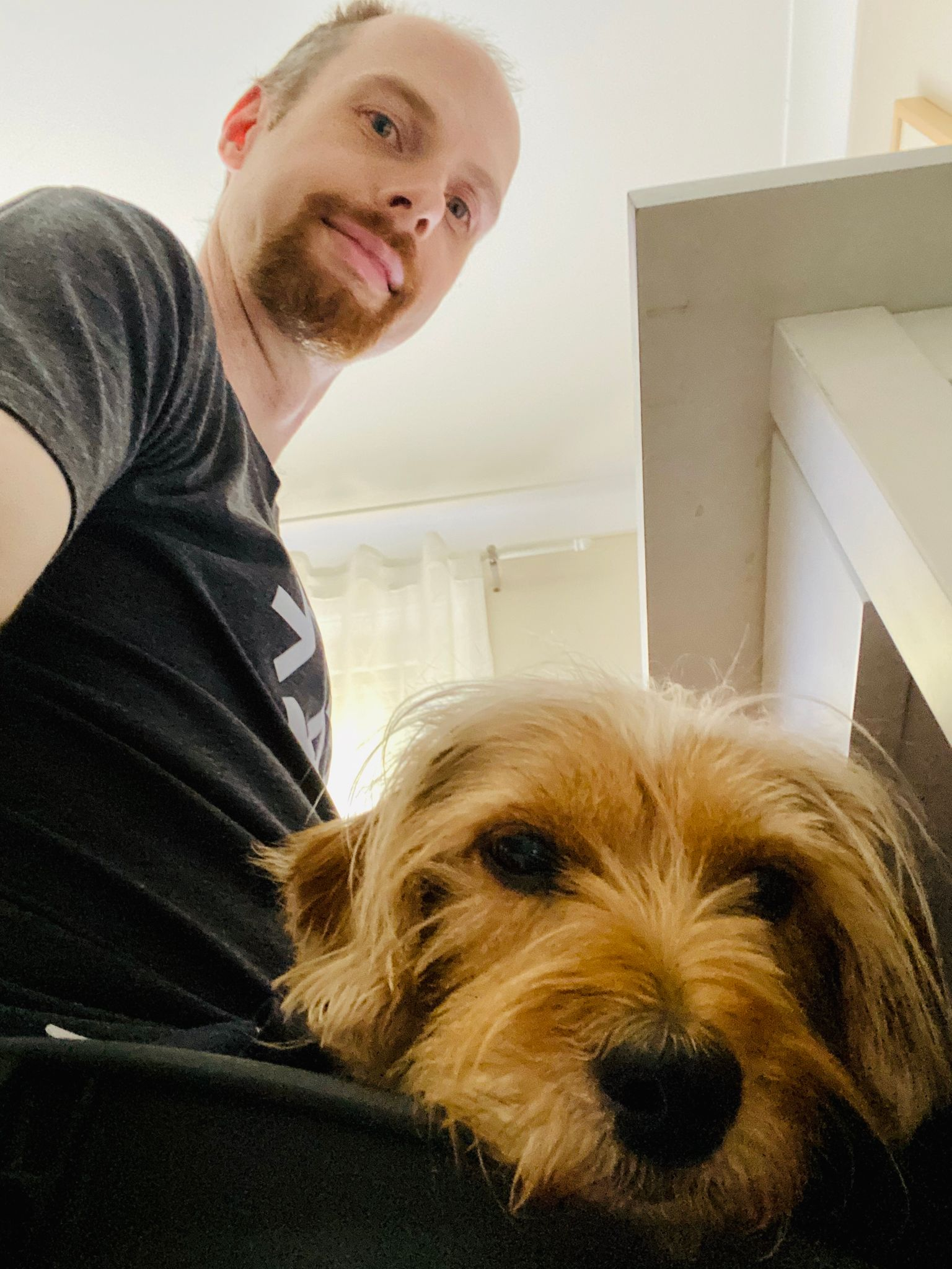 A photo taken from about leg-level next to my computer chair looking up as I — a white male with a red goatee —  look at the camera. A small scruffy blonde dog is lying in my lap also looking at the camera, all that's visible of him is his head. He looks very sleepy.