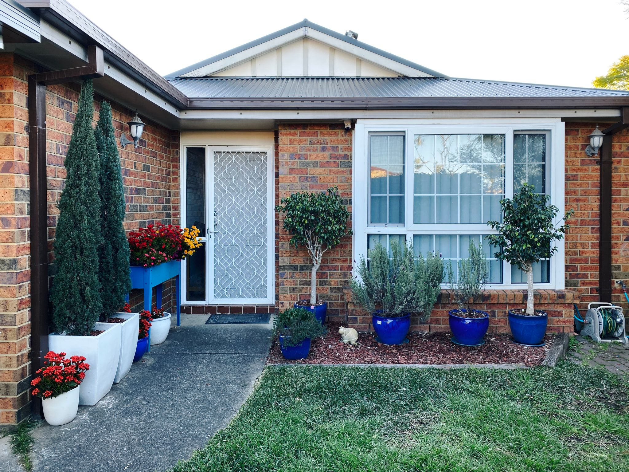 A photo taken of the front of our house. A large bay window sits to the right of the front door, with two trees and two lavender plants in blue pots in front of the window. Leading to the front door is a path with a cheerful blue planter box at the left with colourful flowering kalanchoes, with more in pots on the ground. Two large conifers in tall white pots are also at the left of the path.