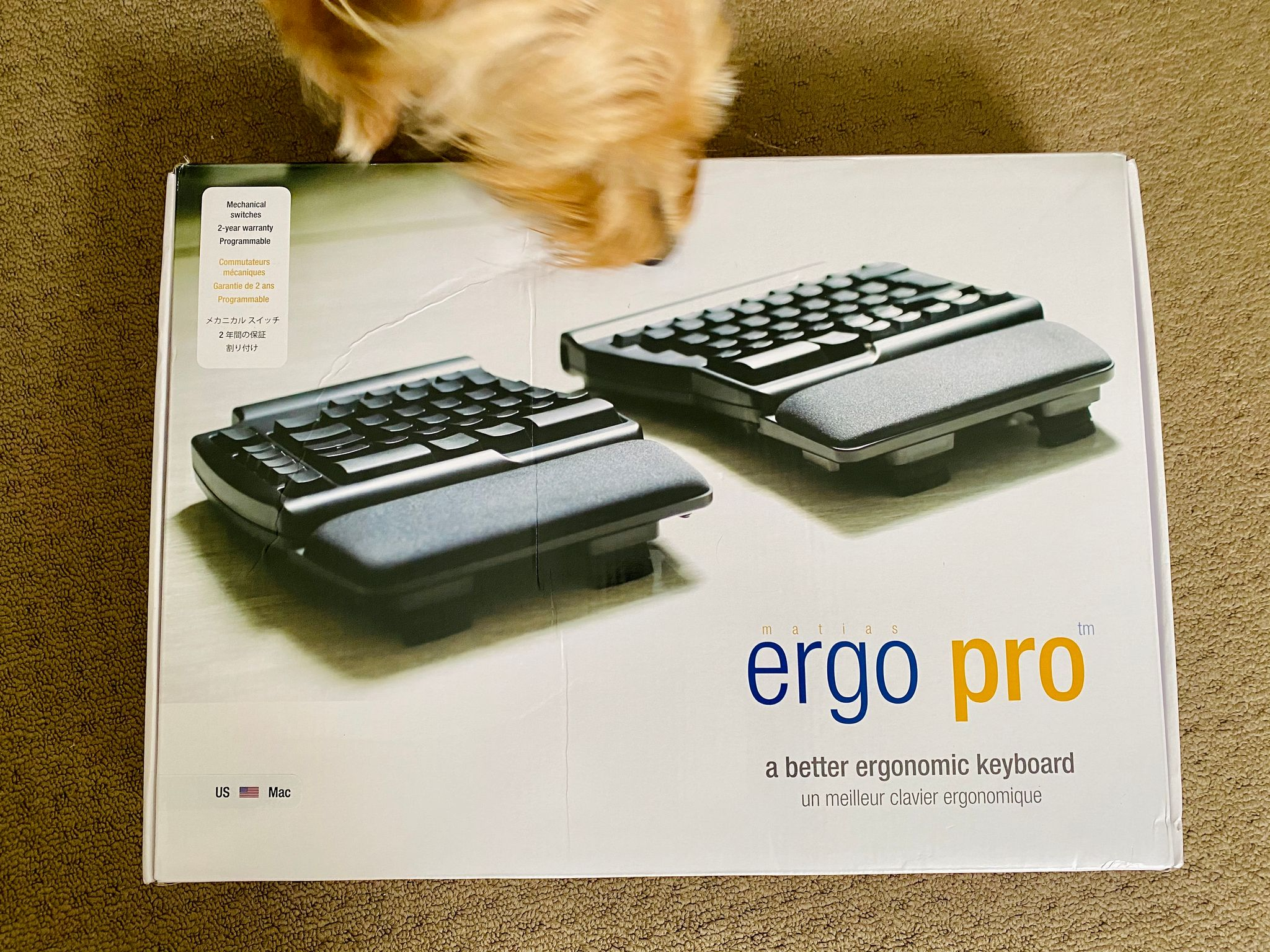 A photo of the box of a Matias Ergo Pro mechanical ergonomic keyboard, with the face of a small scruffy blonde dog giving it a sniff.