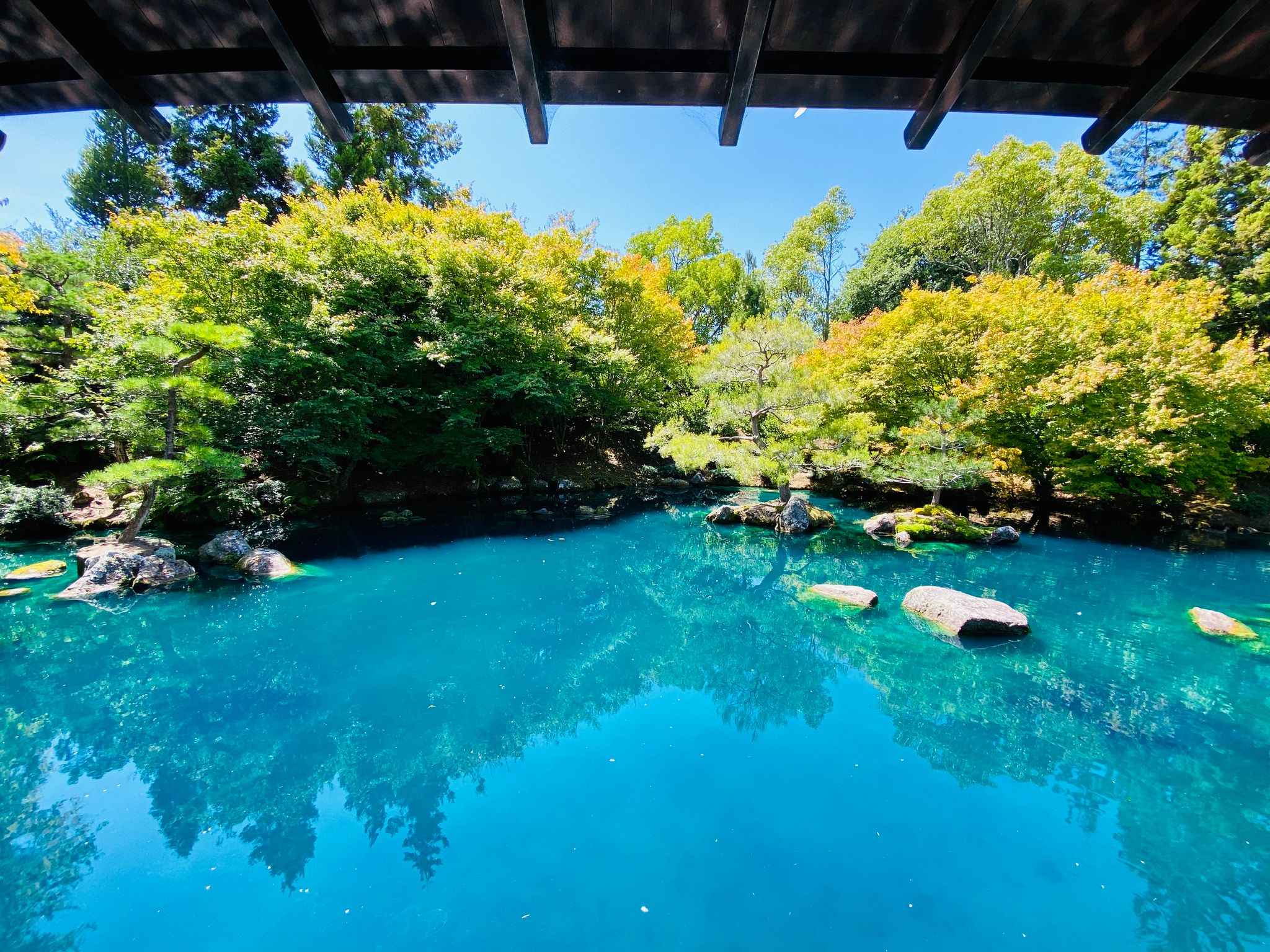 A photo of an unnaturally turquoise pond and Japanese trees.