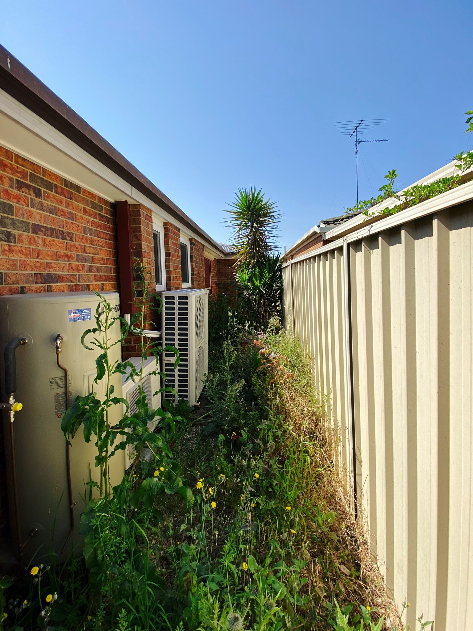 A photo of a relatively narrow section of yard with a cream-coloured fence on the right and a red brick house on the left. A hot water tank and air conditioning compressor are visible against the wall of the house, and the ground is FILLED with weeds, lots of them waist- and even chest-high.