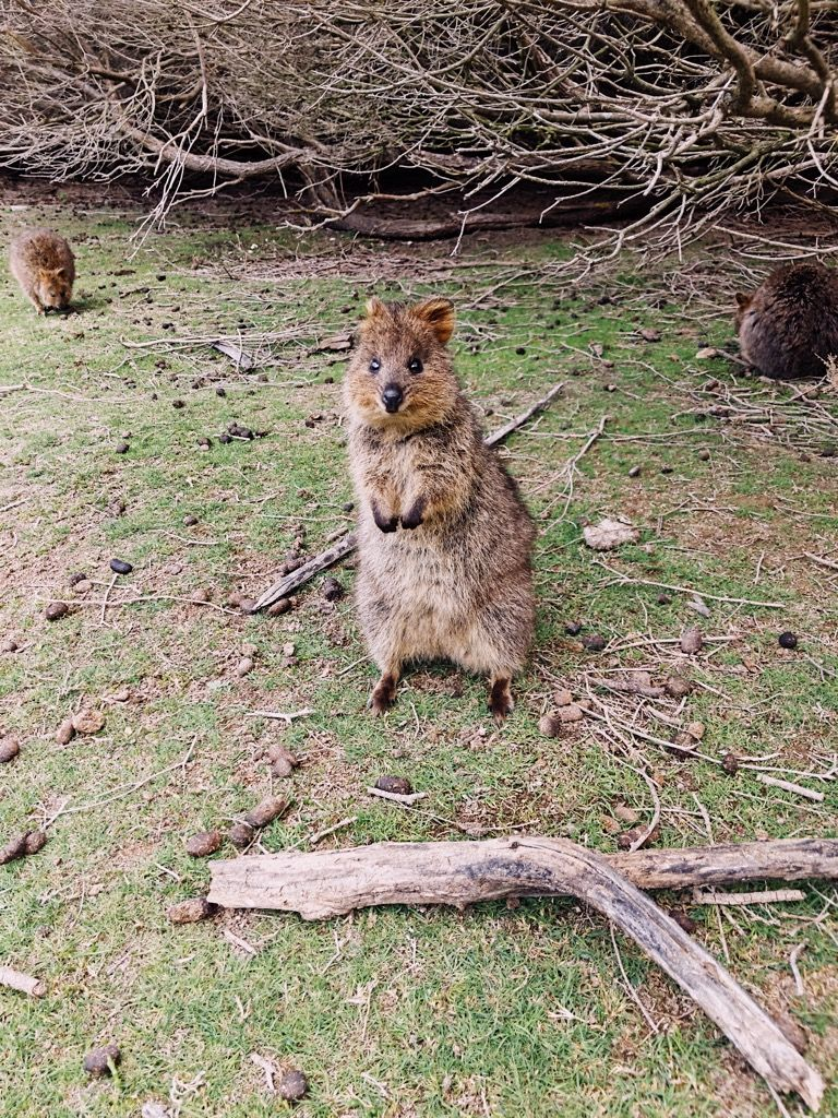 YOU GUYS<br> <br> MOTHERFUCKING QUOKKAS<br> <br> !!!!<br>